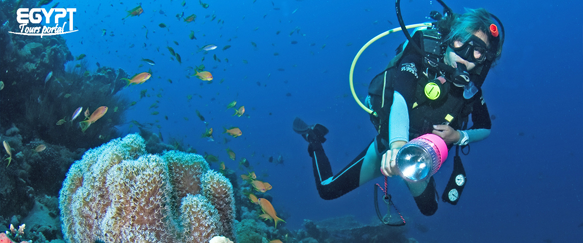 Diving - Things to Do in Port Ghalib - Egypt Tours Portal